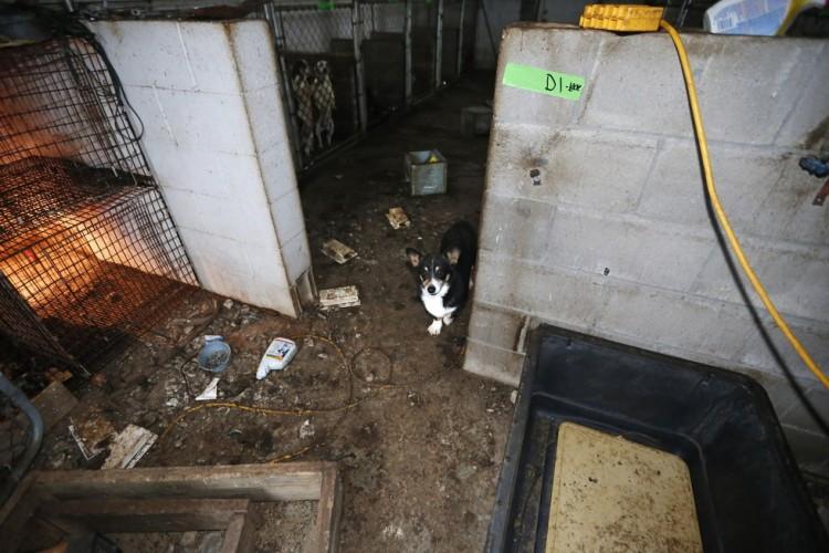 corgi y perros rescatados 1