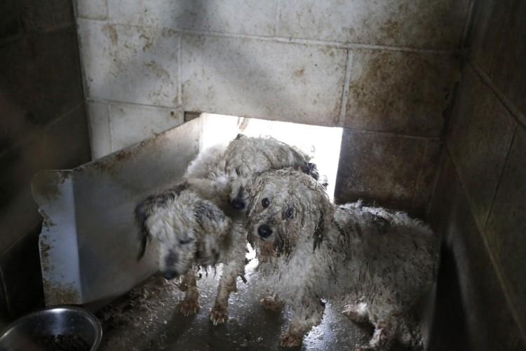 corgi y perros rescatados 2