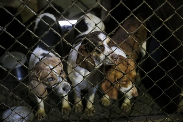 corgi y perros rescatados 3