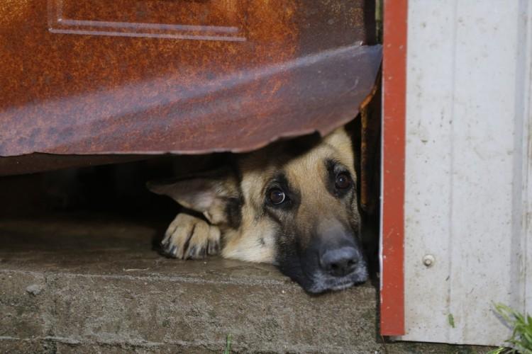 corgi y perros rescatados 4