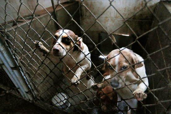 corgi y perros rescatados 5