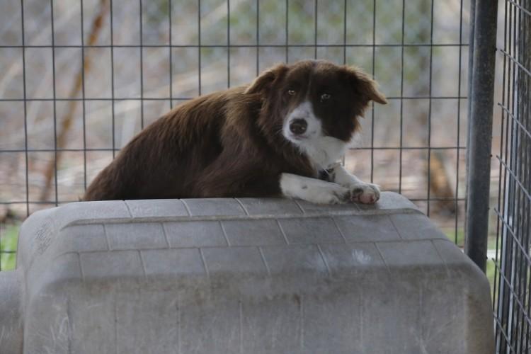 corgi y perros rescatados 6