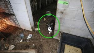 corgi y perros rescatados 7