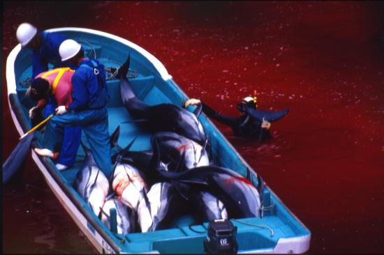 delfines-asesinados-taiji
