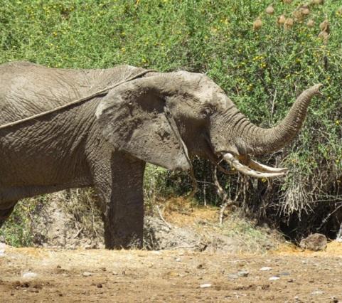 elefante atrapado rescate 5