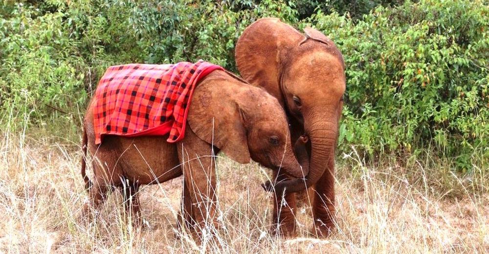 elefante-huerfano-terapeuta