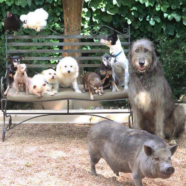 familia-animal