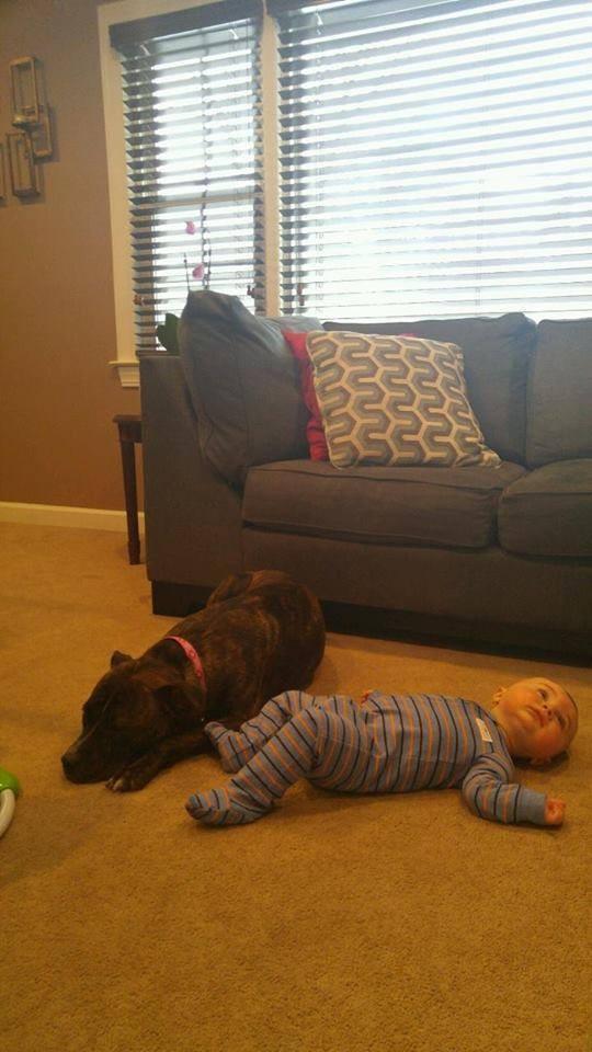 foto perro familia bebe 3
