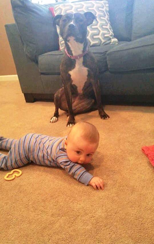 foto perro familia bebe 6