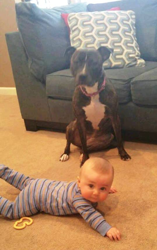 foto perro familia bebe 8