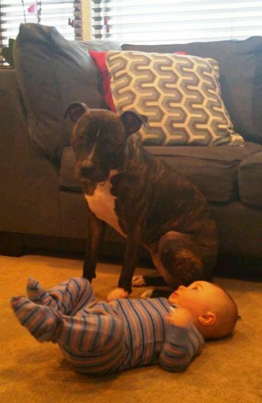 foto perro familia bebe 9