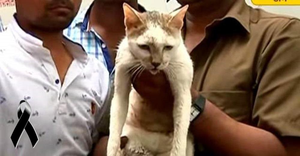 Encuentran a un hombre sin vida por aferrarse a su gato para protegerlo y salvarlo