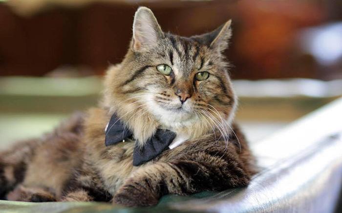gato mas viejo adoptado 1