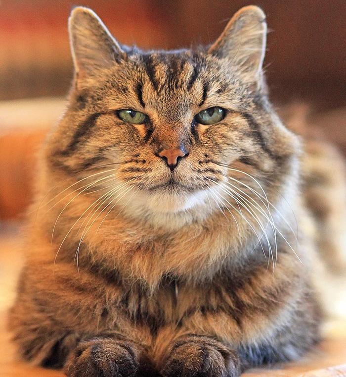 gato mas viejo adoptado 2