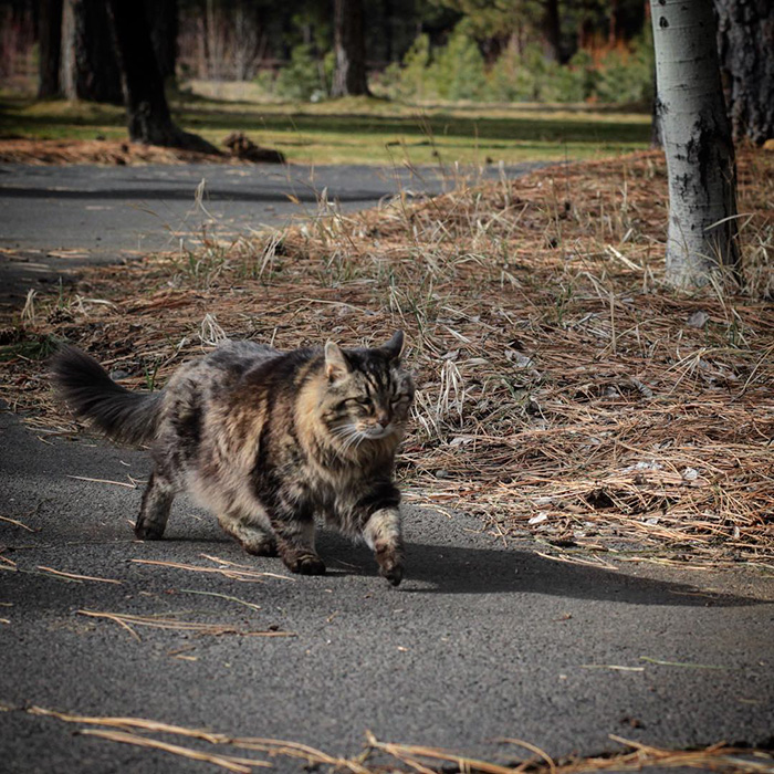 gato mas viejo adoptado 3