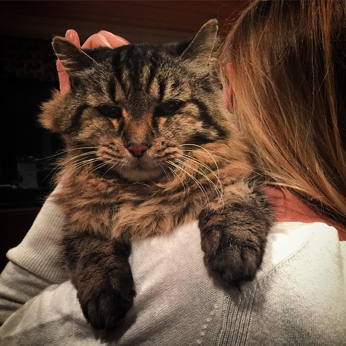 gato mas viejo adoptado 4