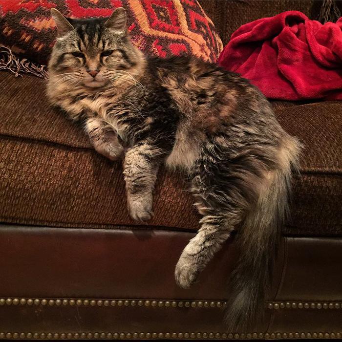 gato mas viejo adoptado 8