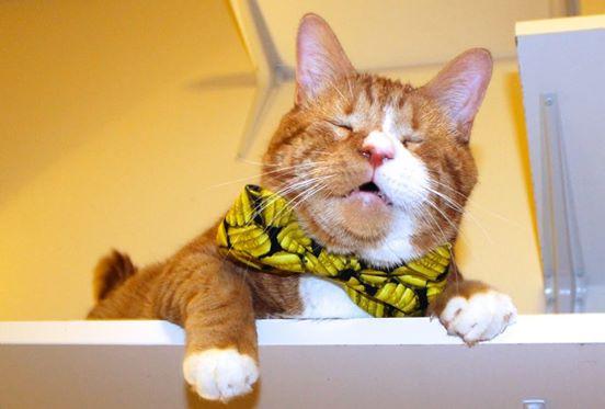 gato mr magoo 12