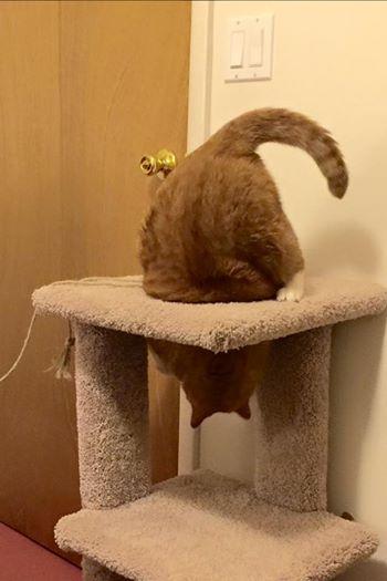 gato mr magoo 5