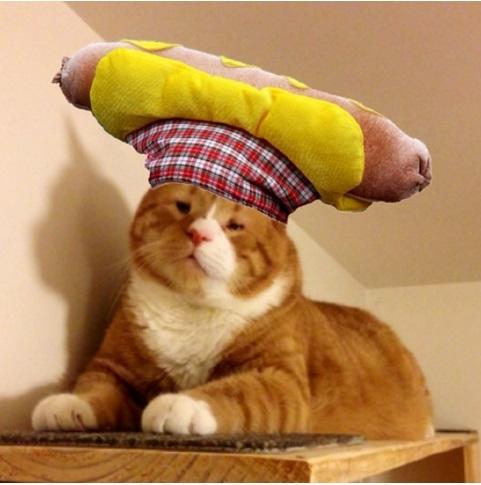 gato mr magoo 7