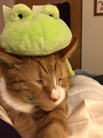 gato mr magoo 8