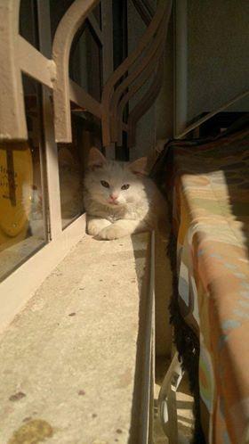gato-se-encuentra-con-su-familia-de-refugiados3