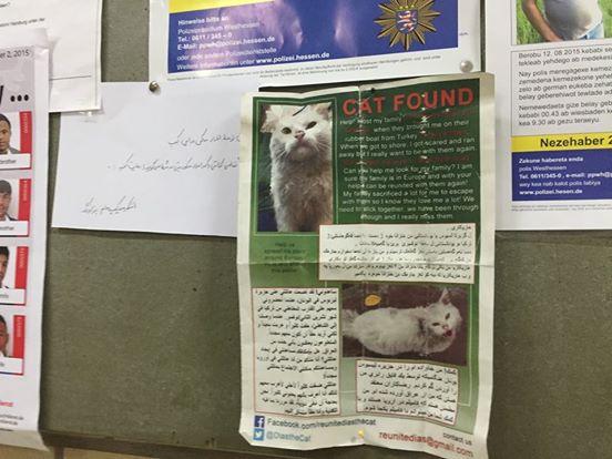 gato-se-encuentra-con-su-familia-de-refugiados5