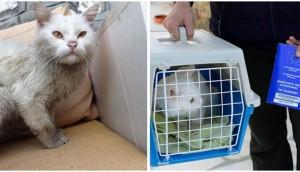 gato-se-encuentra-con-su-familia-de-refugiados8 - copia