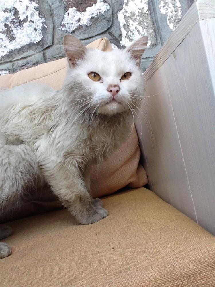gato-se-encuentra-con-su-familia-de-refugiados9