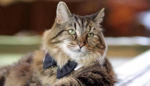 gato-viejito