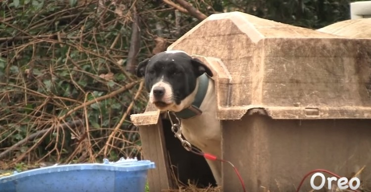 historia-de-perros-encadenados1