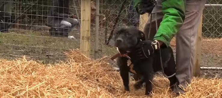 historia-de-perros-encadenados10