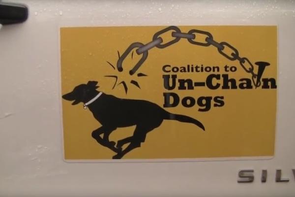 historia-de-perros-encadenados12