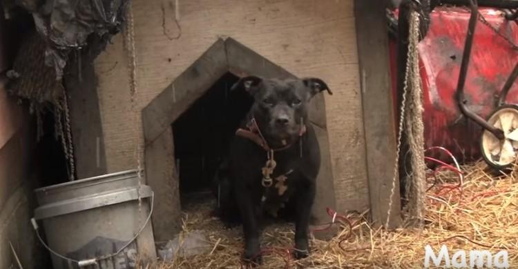 historia-de-perros-encadenados2