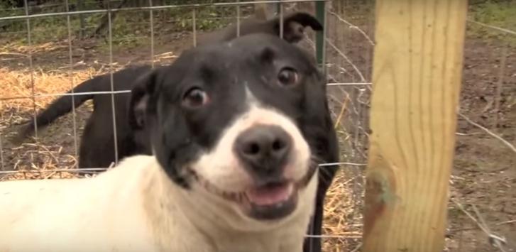 historia-de-perros-encadenados8