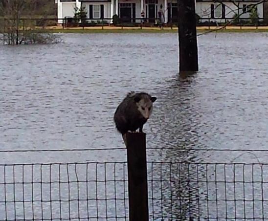 hombre bote animales inundacion 11