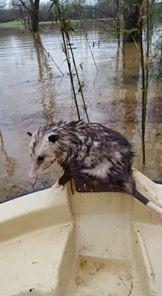 hombre bote animales inundacion 4