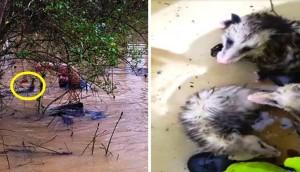 hombre bote animales inundacion portada 1
