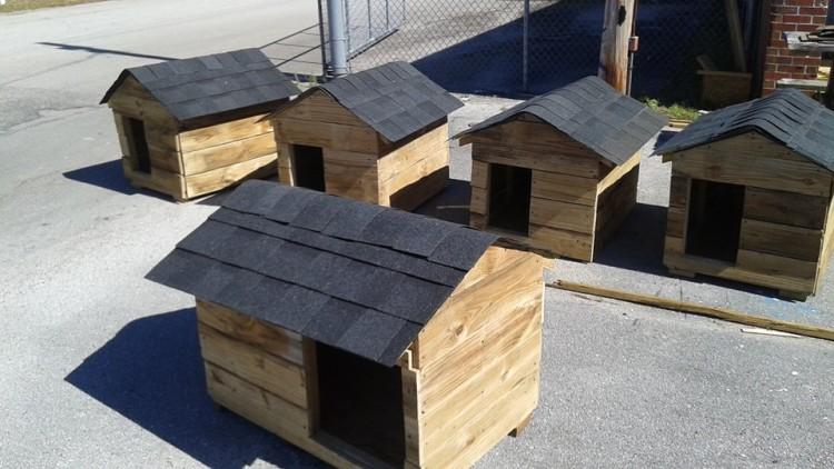 jovenes construyen hogares para perros 1