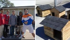 jovenes construyen hogares para perros 5