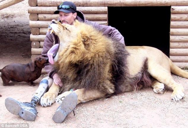 leon-perro-amigos1
