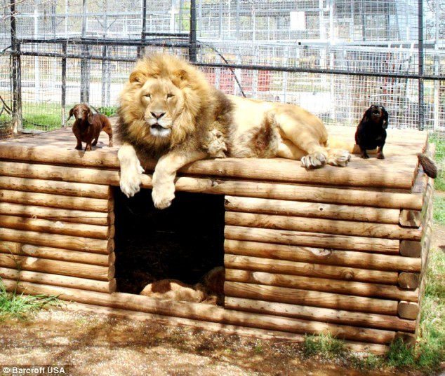 leon-perro-amigos2