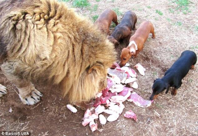 leon-perro-amigos3