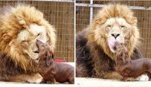 leon-perro-amigos8
