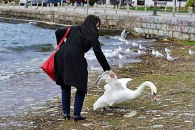 mato-a-cisne-porque-no-queria-aparecer-en-su-selfie2