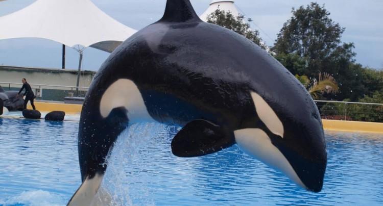orca-de-103-años