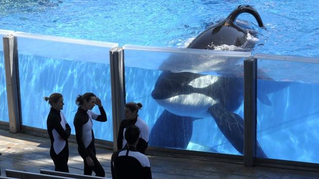 orca-de-103-años3