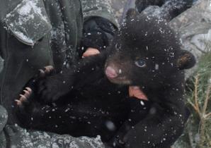 osos-huerfanos-adoptados
