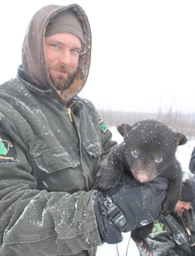 osos-huerfanos-adoptados2