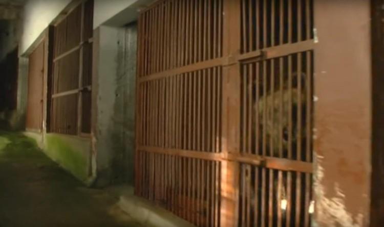 osos-liberados-16-años2